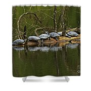Red-eared Slider Turtles Shower Curtain