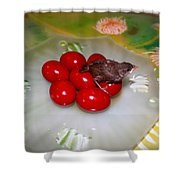 Red Eggs Bird And Flowers Shower Curtain