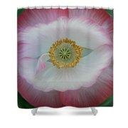 Red Eye Poppy Shower Curtain