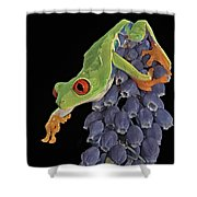 Red Eye  Shower Curtain by Susan Candelario
