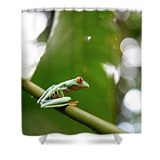 Red Eyed Tree Frog, Agalychnis Shower Curtain