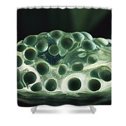 Red-eyed Tree Frog Eggs Shower Curtain