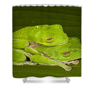 Red-eyed Tree Frogs In Amplexus Sleeping Shower Curtain
