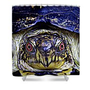 Red Eyed Turtle  Shower Curtain