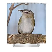 Red-eyed Vireo Shower Curtain