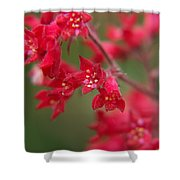 Red Fairy Trumpets Shower Curtain