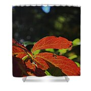 Red Fall Leaves Close Up Shower Curtain