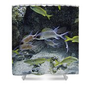 Red Fish Blue Fish Shower Curtain