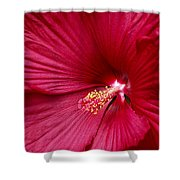 Red Flower 2 Shower Curtain