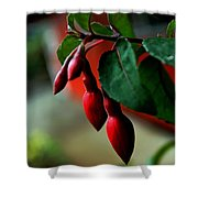 Red Flower Buds Shower Curtain