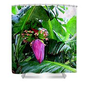 Red Flower Of A Banana Against Green Leaves Shower Curtain