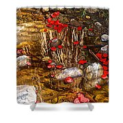 Red Flower Petals In Creek In Lower Palm Canyon In Indian Canyons Near Palm Springs-california Shower Curtain