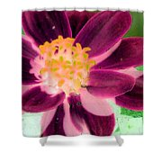 Red Flower - Photopower 256 Shower Curtain