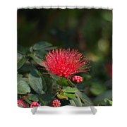 Red Flower Spraying Shower Curtain