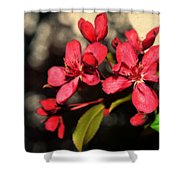 Red Flowering Crabapple Blossoms Shower Curtain