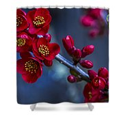 Red Flowering Quince Shower Curtain