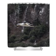 Red Footed Booby In Flight Shower Curtain