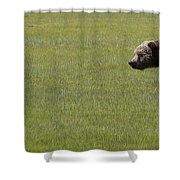 Red Fox  And Grizzly Bear Shower Curtain