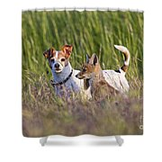 Red Fox Cub With Jack Russel Shower Curtain