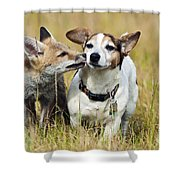 Red Fox Cub With Jack Russell Shower Curtain