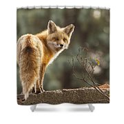 Red Fox In The Sunset Shower Curtain