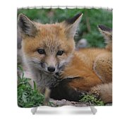 Red Fox Kit Stays Alert Shower Curtain