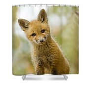 Red Fox Kit Up Close Shower Curtain