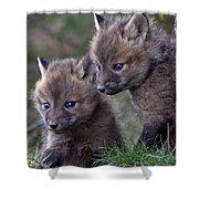 Red Fox Kits Shower Curtain