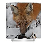 Red Fox Upclose Shower Curtain