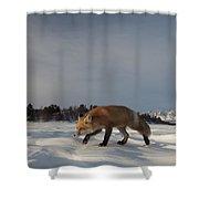 Red Fox Walking In Snow Alaska Shower Curtain