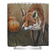 Red Fox With Pumpkins Shower Curtain