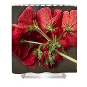 Red Geranium In Progress Shower Curtain