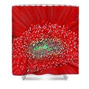 Red Gerbera Flower  Shower Curtain