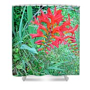 Red Gift Shower Curtain