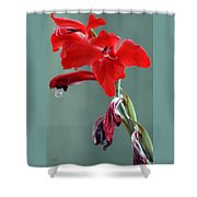 Red Gladiolus Shower Curtain