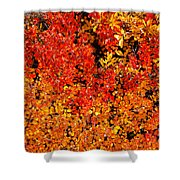 Red-golden Alpine Shrubs Shower Curtain