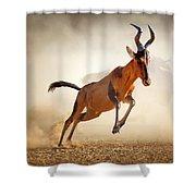 Red Hartebeest Running In Dust Shower Curtain