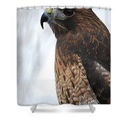 Red Hawk I Shower Curtain