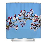 Red Haws Frosted By Snow Shower Curtain
