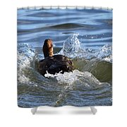 Red Head Duck Resurfaces With A Splash Shower Curtain