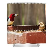 Red-headed Woodpecker Feeding Shower Curtain