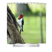 Red Headed Woodpecker Shower Curtain