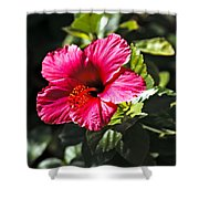 Red Hibiscus Shower Curtain by Robert Bales