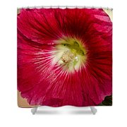Red Hollyhock Althaea Rosea Shower Curtain