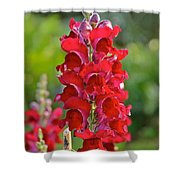 Red Snapdragon Shower Curtain