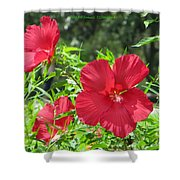 Red Hollyhocks Shower Curtain