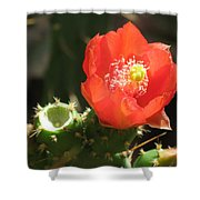 Hot Red Cactus Shower Curtain