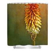 Red Hot Poker Shower Curtain