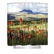 Red Hot Pokers Of The Andes Shower Curtain