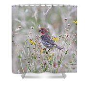 Red House Finch In Flowers Shower Curtain